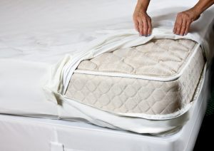 get rid of bed bugs encasement