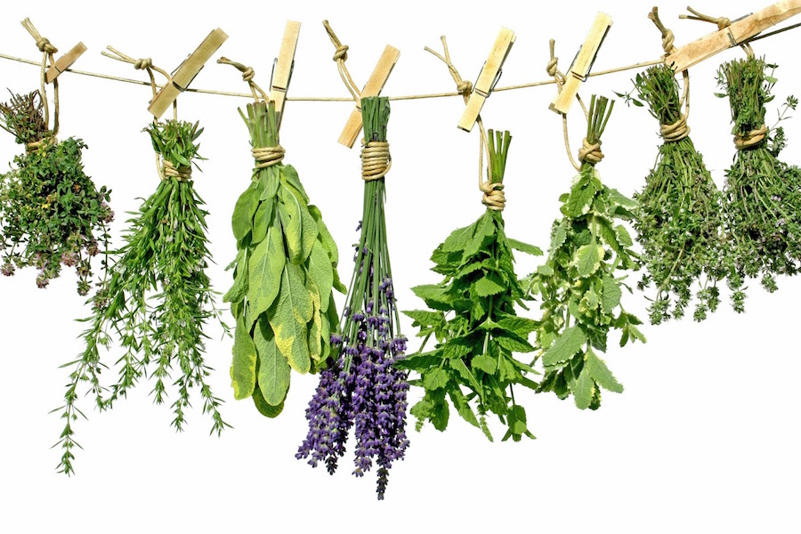 7 Powerful Herbal Remedies You Can Grow At Home